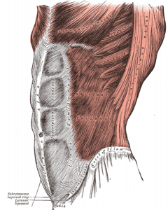 Douleurs, tensions et spasmes musculaires abdominaux (crampes)
