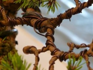 Branches de bonsaï ligaturées