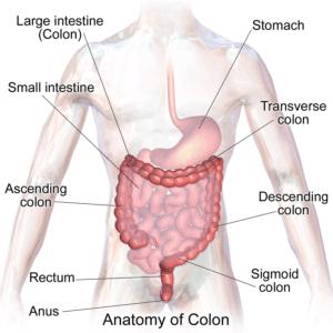 Causes de la douleur abdominale droite (douleur à l'estomac)