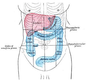Emplacement de la douleur au côlon (côté droit, côté gauche), symptômes et causes.